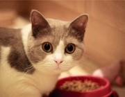 猫粮应该如何进行储存