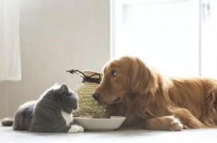 养宠常识:猫粮和狗粮不能混着吃!