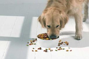 科学喂狗粮的方法