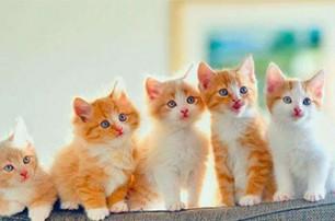 猫粮罐头打开后可以保存多久?