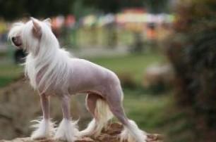 狗狗主人需要了解狗狗掉毛的原因和护理办法